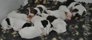 12 days old
